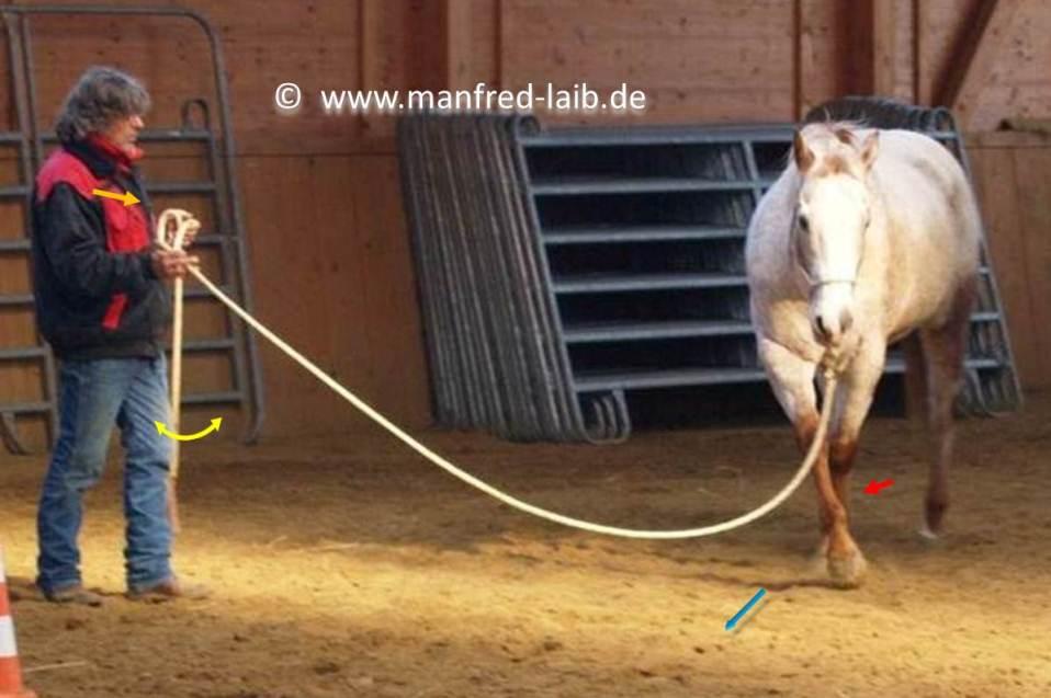 """TGT Übung 25 """"die Acht"""" zur Gymnastizierung, Biegung & Geraderichten - Foto aus meinem Kurshandbuch © Manfred Laib"""