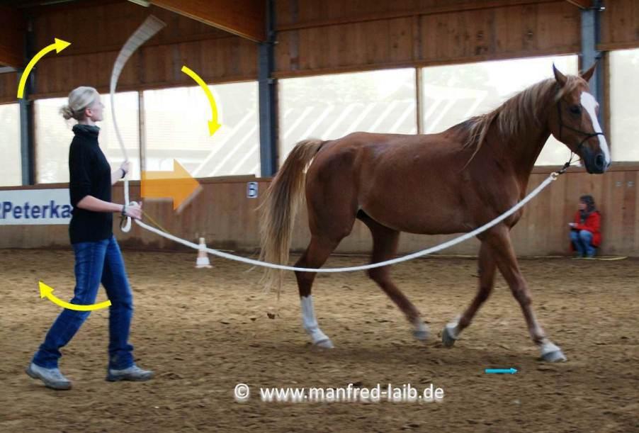 TGT Übungen zur Focusierung, Körperenergie, Einsatz von treibendem und führendem Leitseil  - Foto aus meinem Kurshandbuch © Manfred Laib