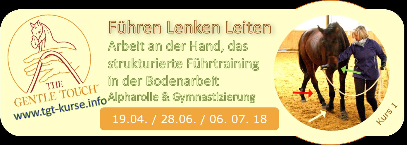 Klick für Infos zu diesem Kurstag: TGT® Führtraining stärkt das Gehorsam, ist gymnastizierend und entspannt das Pferd ® Peter Kreinberg