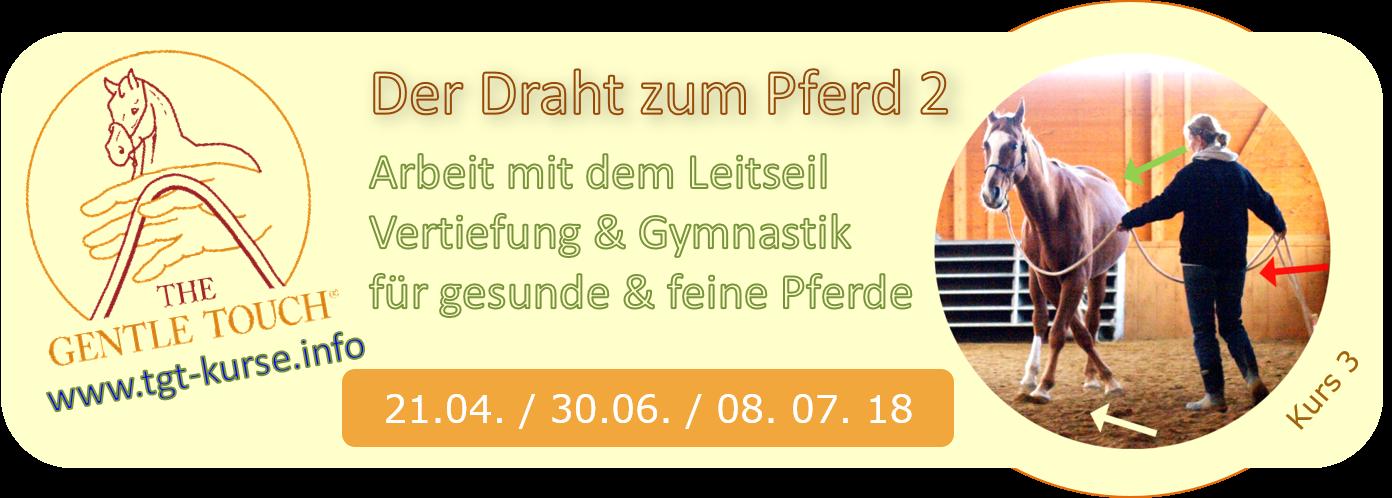 Klick für Infos zu diesem Kurstag: TGT® Leitseilarbeit, Vertiefung mit Gymnastizierung für gesunde und willig mitarbeitende Pferde