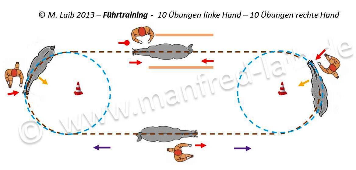 TGT Übung 1-10 Führtraining - Grafik aus meinem Kurshandbuch © Manfred Laib