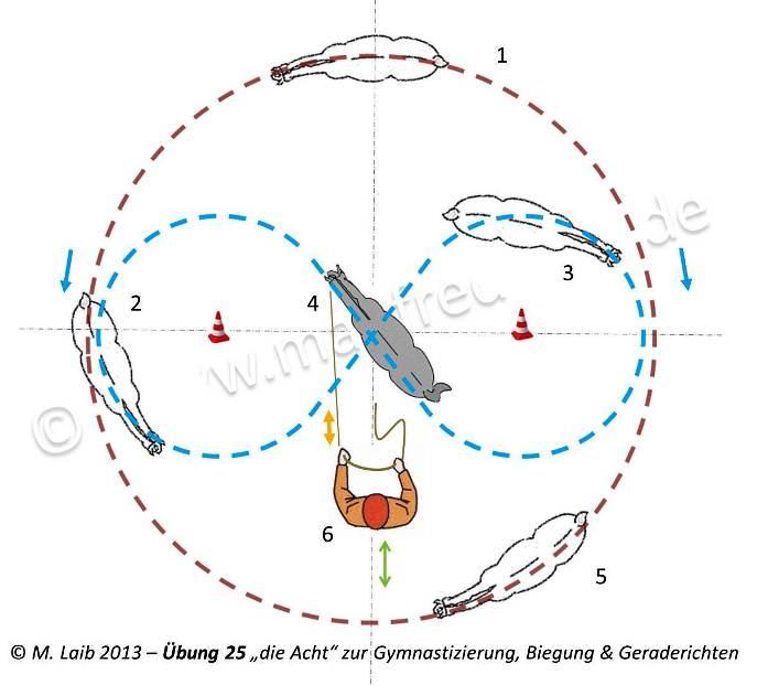 """TGT Übung 25 """"die Acht"""" zur Gymnastizierung, Biegung & Geraderichten - Grafik aus meinem Kurshandbuch © Manfred Laib"""