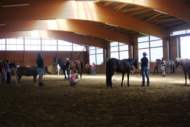 eine große Gruppe von Pferden und Menschen lernen bei Manfred und Silke Laib am Pfeifferhof