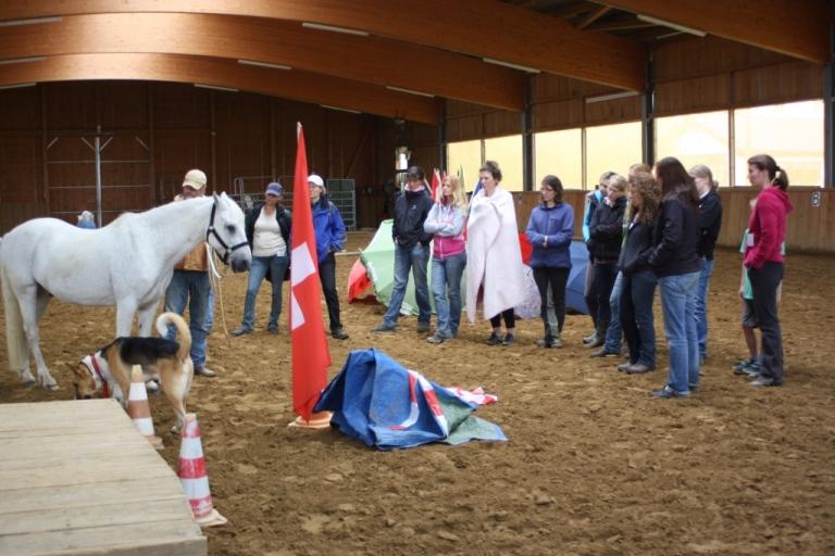 Therapie-Pferde-Ausbildung für das Institut für Pferdegestützte Therapie am Pfeifferhof