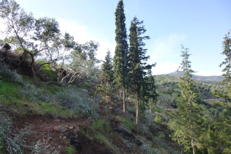 """Januar 2014 """"der Zauberwald"""" links über dem Olivenbaum wird die Terrasse entstehen"""