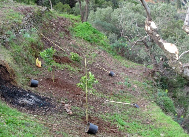 die unterste Terrasse wird mit Orange, Crapefruit und Lemone (Zitrone) bepfllanzt. Ein guter Platz für Zitrusbäume da diese viel Wasser benötigen.