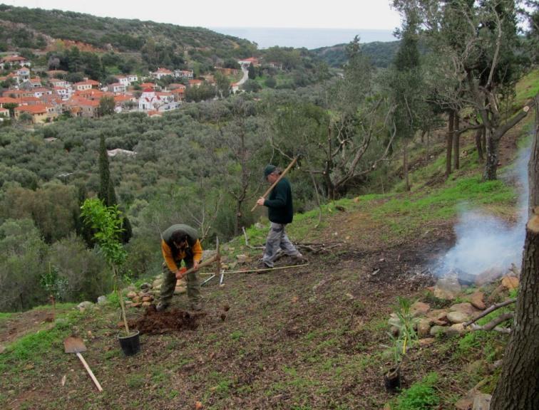 restliche Macchia wird auf der dritten Terrasse verbrannt und gleichzeitig neu bepflanzt