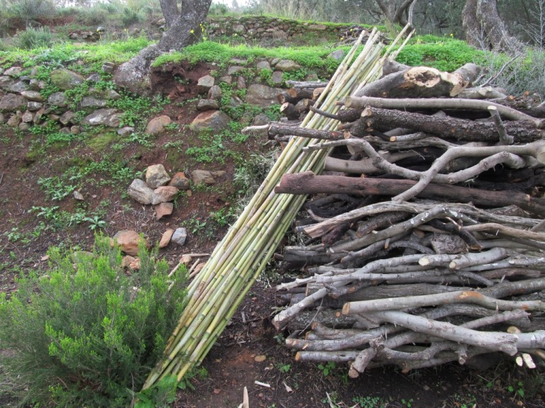 unten am Meer haben wir Bambus geschnitten und geschält, sehr stabil, dennoch elastisch, hervorragend zum Anbinden frisch gepflanzter Bäume geeignet