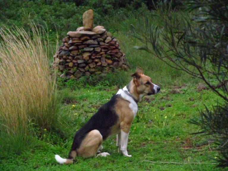 Hundewetter - Sam im Garten unseres Winterquartiers