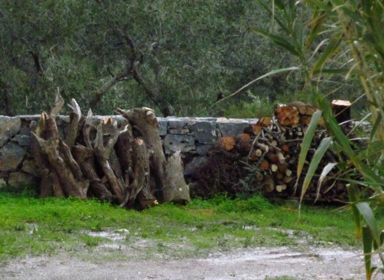 """Sobald es nach dem vielen Regen etwas abgetrocknet ist """"geht es wieder ins Holz"""""""