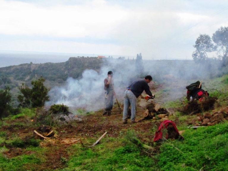Wurzelholz wird gleich klein gesägt, kleine Äste und Macchia verbrannt, der Rest kommt auf den Brennholzstapel