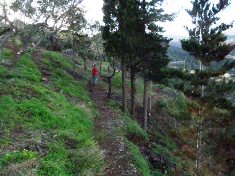der Zauberwald (nord-östlicher Teil) auf unserem Grundstück am späten Nachmittag