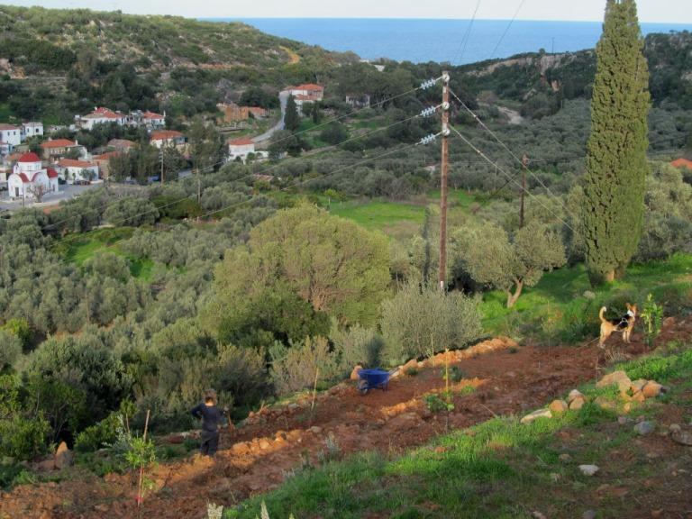 der letzte Zipfel unseres Grundstücks nach Osten - Olivengarten - in der Abendsonne