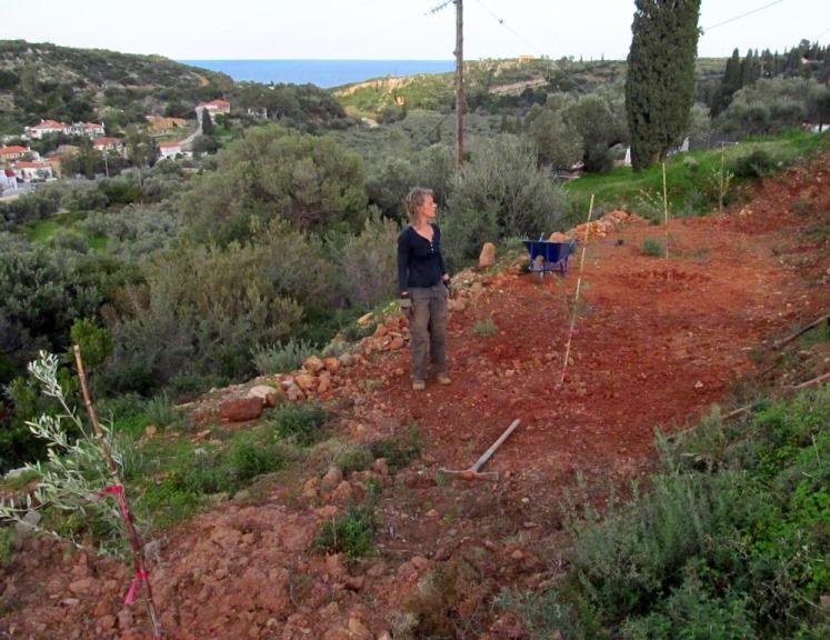 auf den untersten Terrassen Richtung Osten beginnen wir nach dem Pflanzen der neuen Bäume den Boden zur Einsaat bereit zu machen