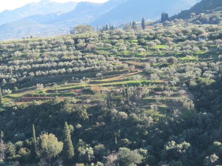 unser kleines Paradies auf Peleponnes bei Nomia