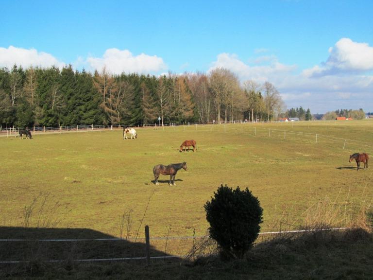 Sonnenschein & angenehme 17,3° am Küchenfenster am Pfeifferhof - nicht nur die Pferde genießen das !!