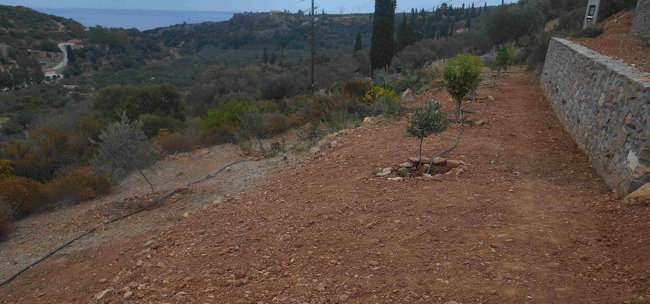 unsere Freunde haben die Obstbaum Terrasse zum Garten gemacht  © Foto: Lefteris Delastik