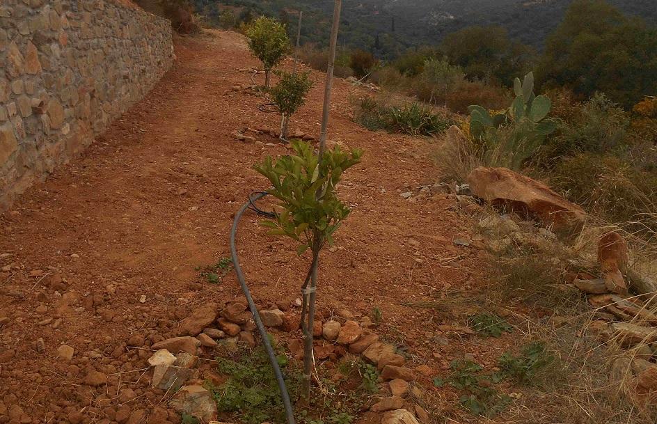 und sie kontrollieren regelmäßig die Bweässerung, so überlebten alle kleinen Bäume die Trockenheit gut  © Foto: Lefteris Delastik