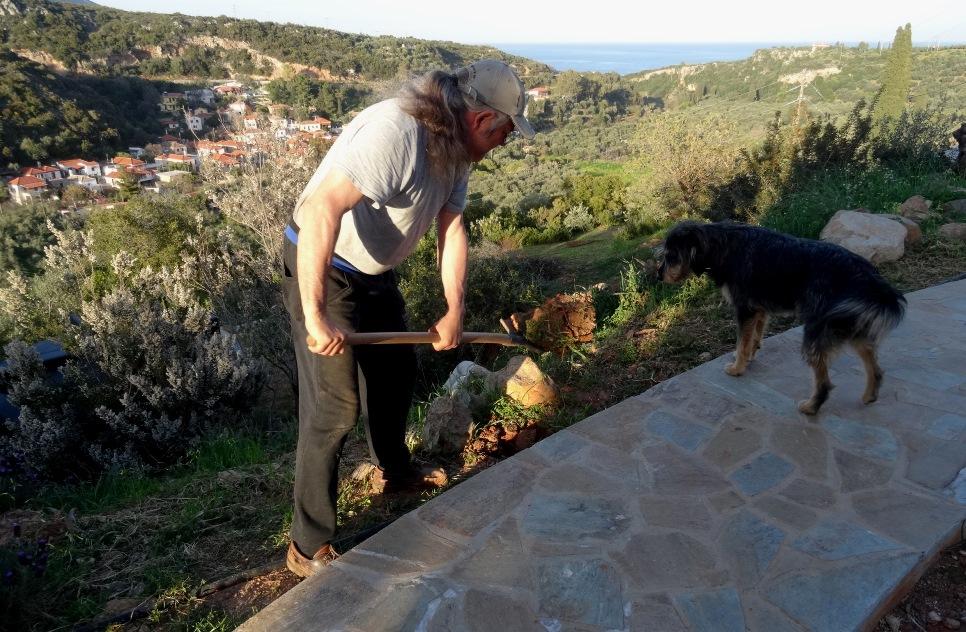 neue Pflanzlöcher für Oleander und Hibiskus werden gegraben und die Hunde sind aufmerksam überall dabei