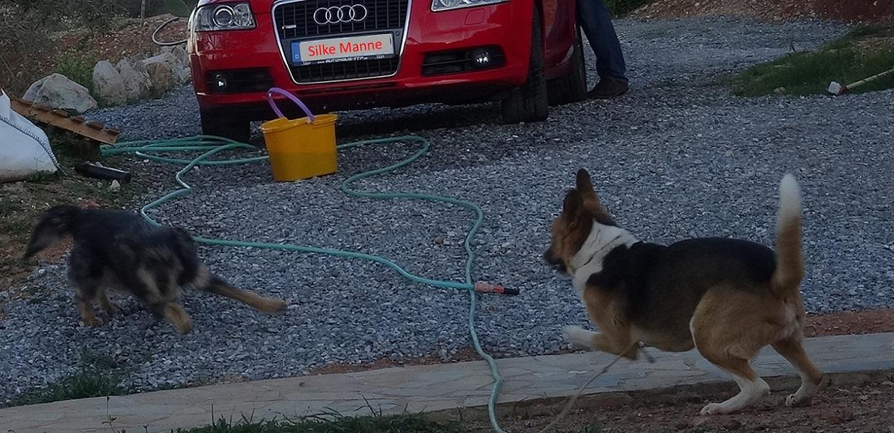 am Abend als die Sonne verschwand wurden die Hunde wieder lebendig