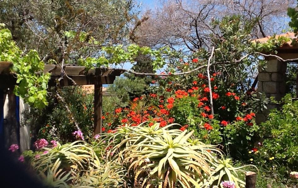 in Nachbars Garten bei Otti und Hartmut