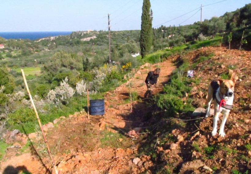 Steine entfernen, mit der Spitzhacke den Boden lockern, rechen und anschließend Grünpflanzen-Samen drauf geben.