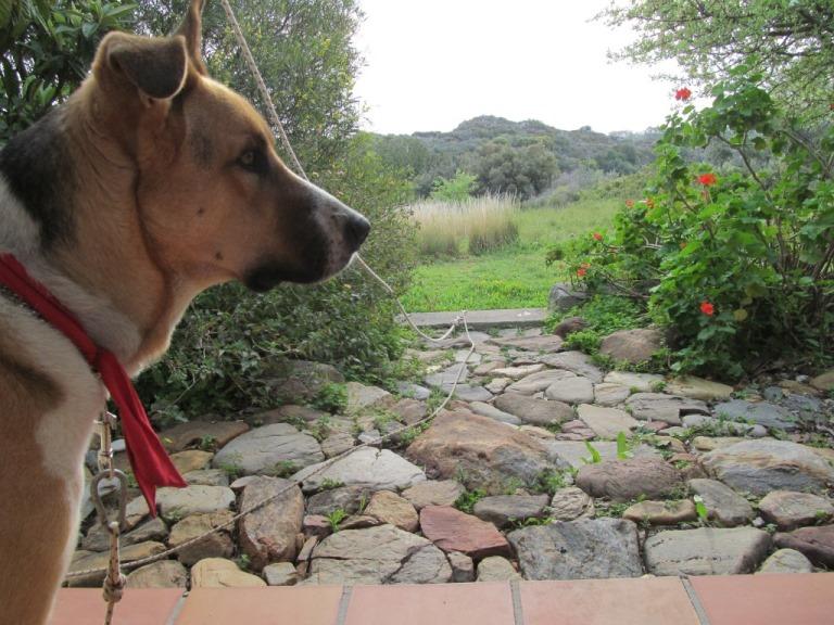 Sam unser Hund seit Tagen die ersten kurzen Momente ohne Sonne