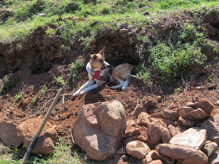 Sam bewacht die ausgegrabenen Steine