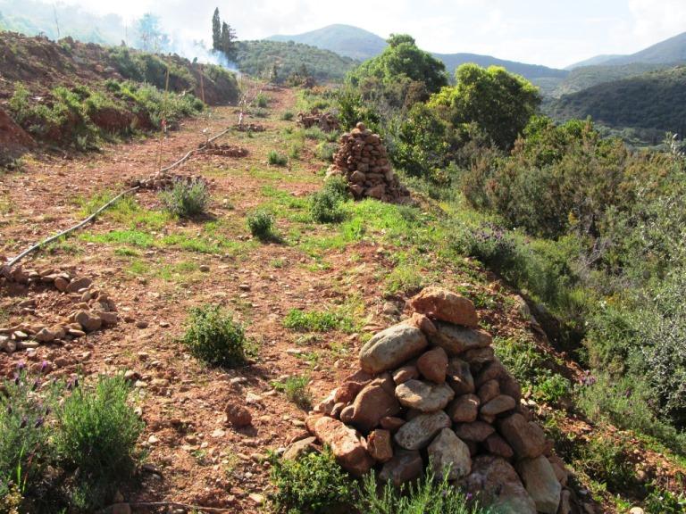 die Terrasse mit den neuen Olivenbäumen ist fertig