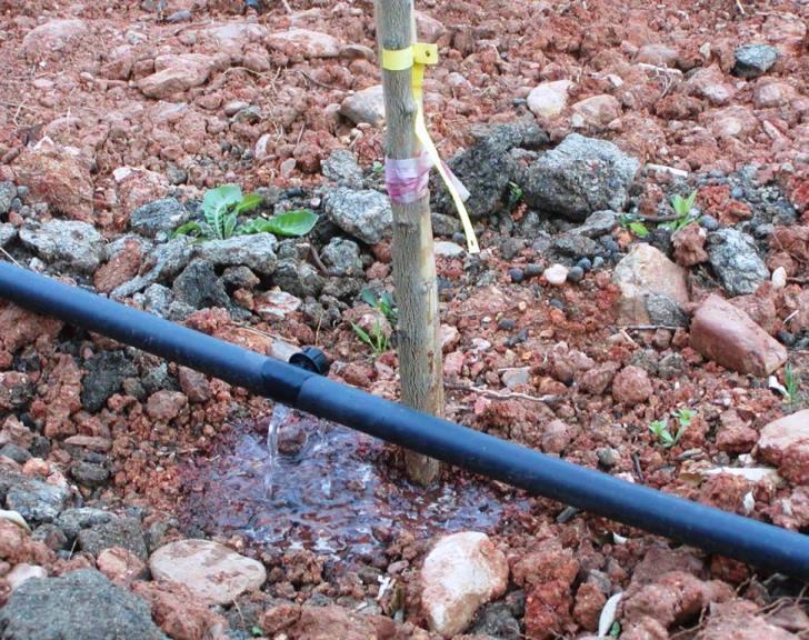 alle Bäume bekommen nun in der Sommerzeit genügend Wasser um gut zu wachsen (Foto: Lefteris Delastik)