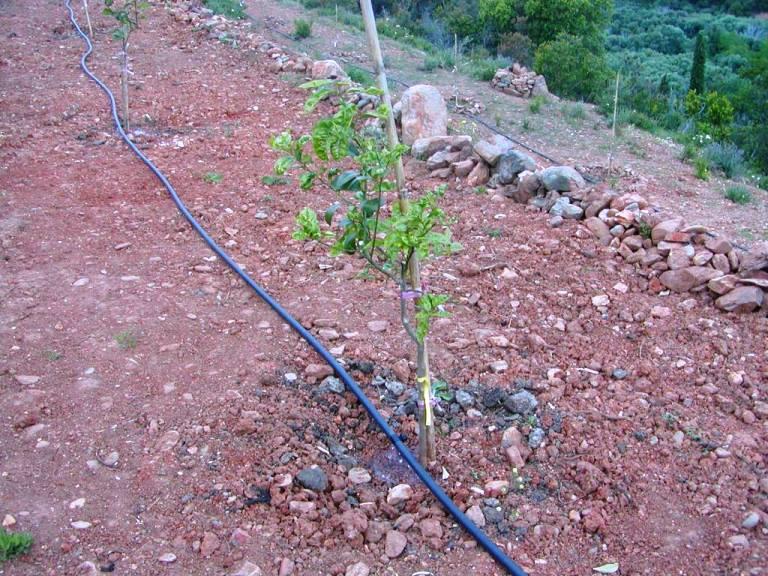 die Bewässerung aller neuen Pflanzen läuft so wie wir uns dies vorgestellt haben (Foto: Lefteris Delastik)