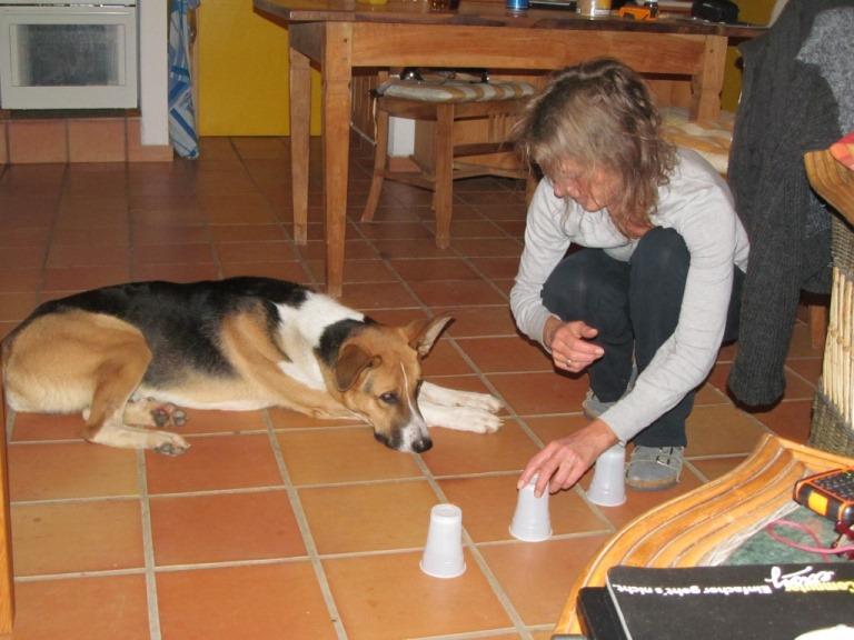 nicht nur draussen rum rennen, Kopfarbeit für unseren Hund Sam ist angesagt