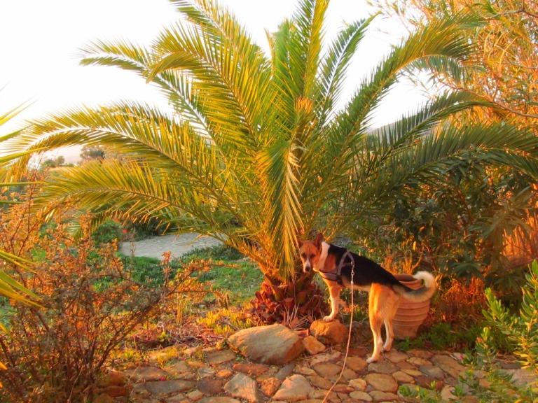 Sam vor der Palme in der Morgensonne. Man glaubt es kaum, die Palme is von Aldi ganz klein mal gekauft worden