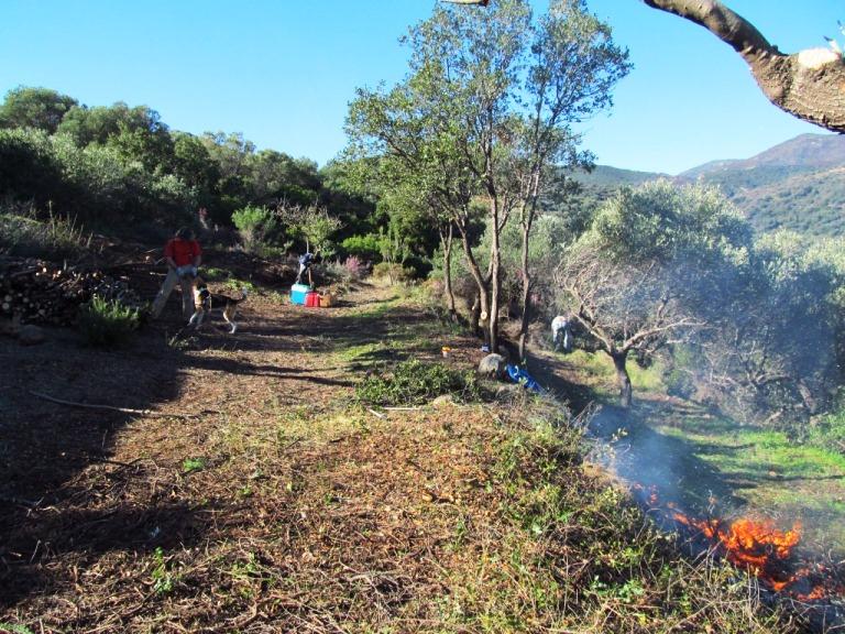 die nächst tiefere Terrasse ist heute fertig geworden. Drei weitere Olivenbäume sind ausgeschnitten, wir freuen uns auf die Ernte 2014