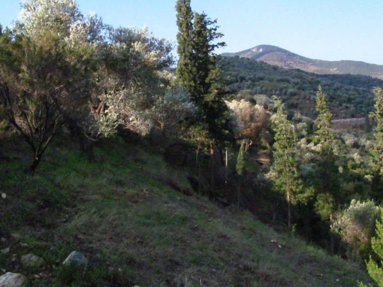 Morgensonne im Zauberwald, der nördliche Teil des Grundstücks