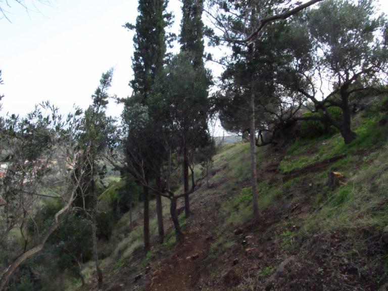 Durchsicht - vor wenigen Tagen konnten wir hier nur vermuten, was an wunderbarem Baumbestand vorhanden ist. Heut wissen wir, dass wir fast 30 Olivenbäume und weitere regionale Laubbäume in Zukunft pflegen dürfen