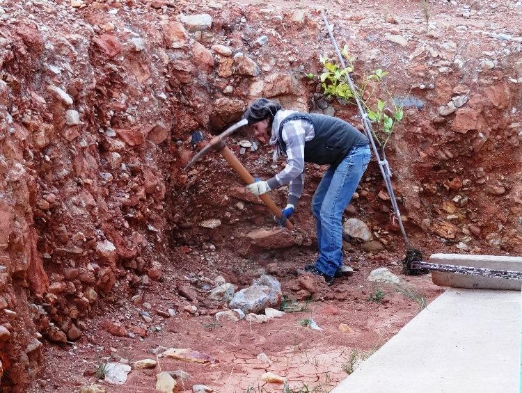 es ist mühsam die Pflanzgruben für die Zitronenbäume zu graben