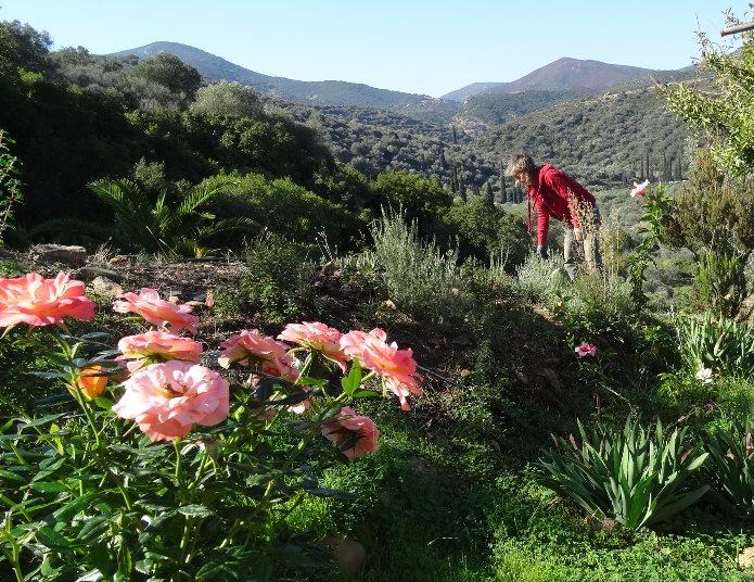 Rosenblüte im November und irgendwo findest Du Silke meist dazwischen