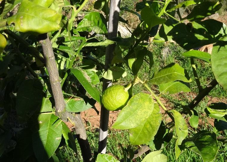 die Arbeit an Natur und Pflanzen trägt Früchte
