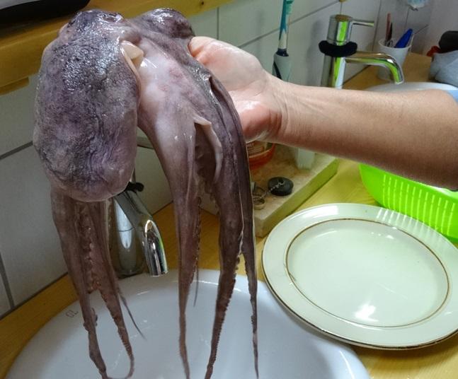 ein Oktopus, weil heut Freitag ist