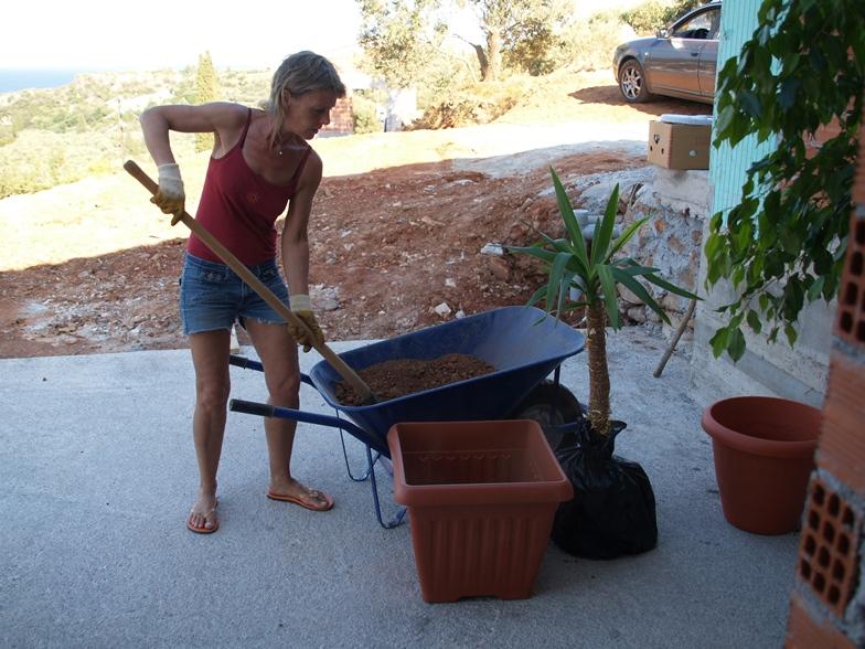 mitgebrachte Zimmerpflanzen werden erst eingetopft bevor sie hier bald ins Freiland gepflanzt werden