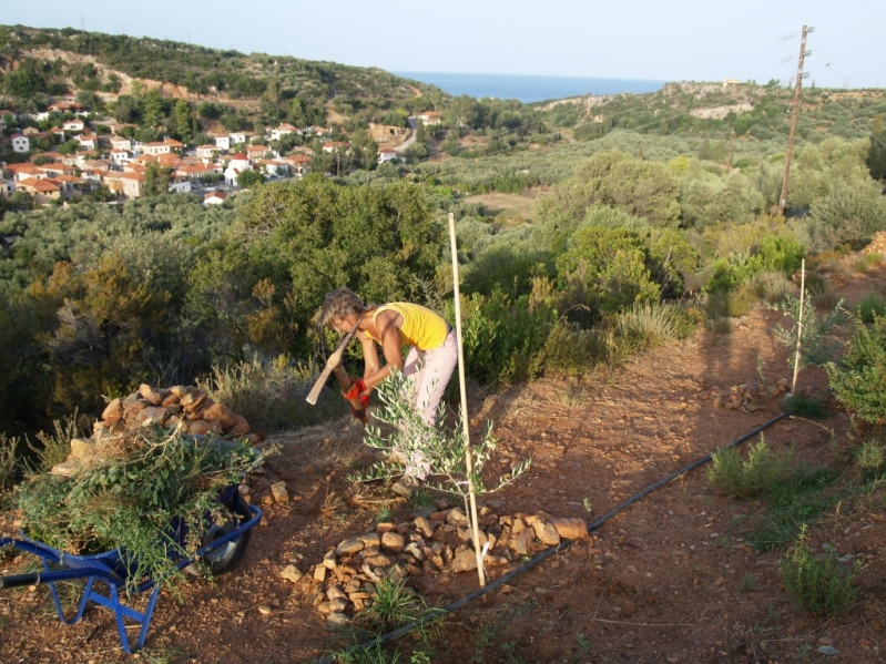 Werkeln bei den neu gepflanzten Bäumchen