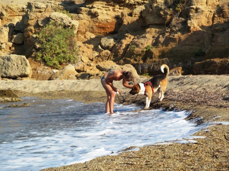 ist das ein typisch griechischer Hund der bei dieser Wärme nicht ins Meer möchte ???