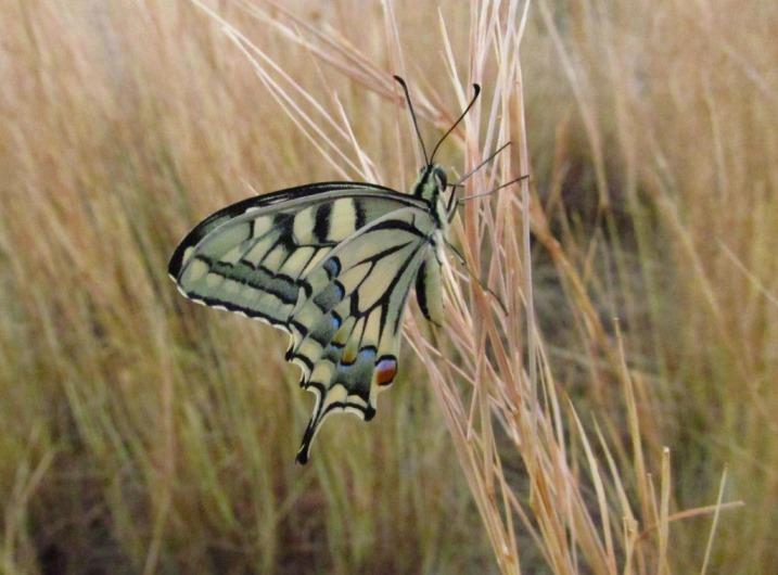 ... wir ein Schmetterling (original unbearbeitetes Fotos)