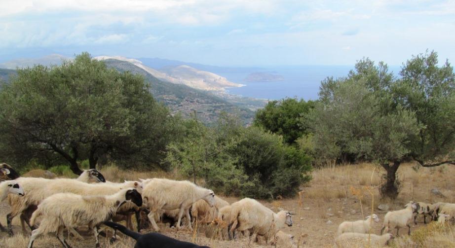 in den Bergen von Monemvasia über dem Dörfchen Foutia und Argeiteika