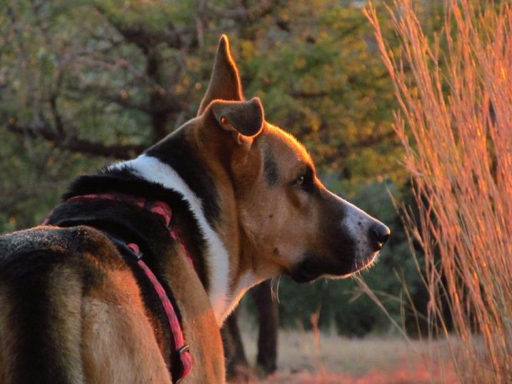 selbst Sam genießt diese Morgenstimmung und freut sich auf den Spaziergang mit Silke