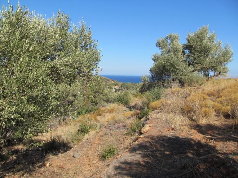 Blick aus den Olivenbäumen über das Grundstück KADOWLOS