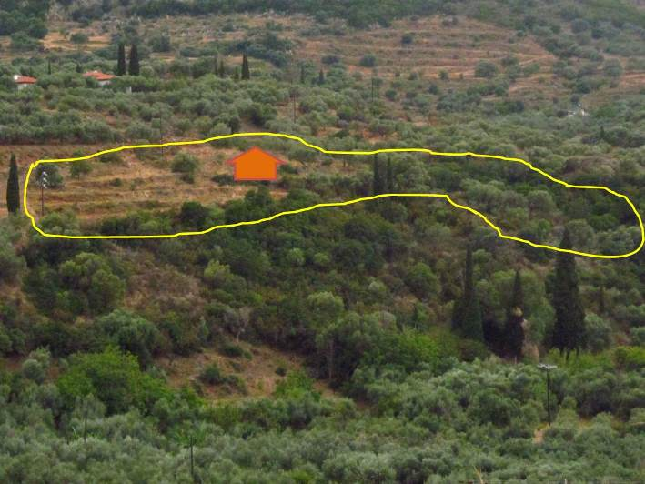 Das 4.130,26 m² große Grundstück KADOWLOS mit dem geplanten Standort unseres Hauses und den vielen Olivenbäumen und der Freifläche auf welcher wir neue Bäume anpflanzen werden
