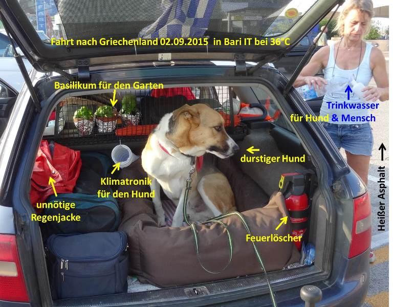 Blick ins Auto