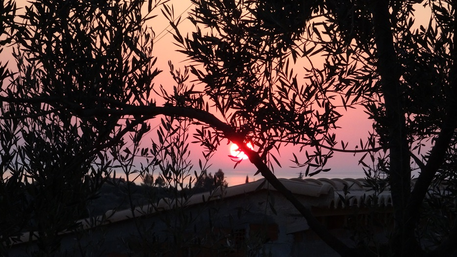 Unsere Oliven in der Morgensonne